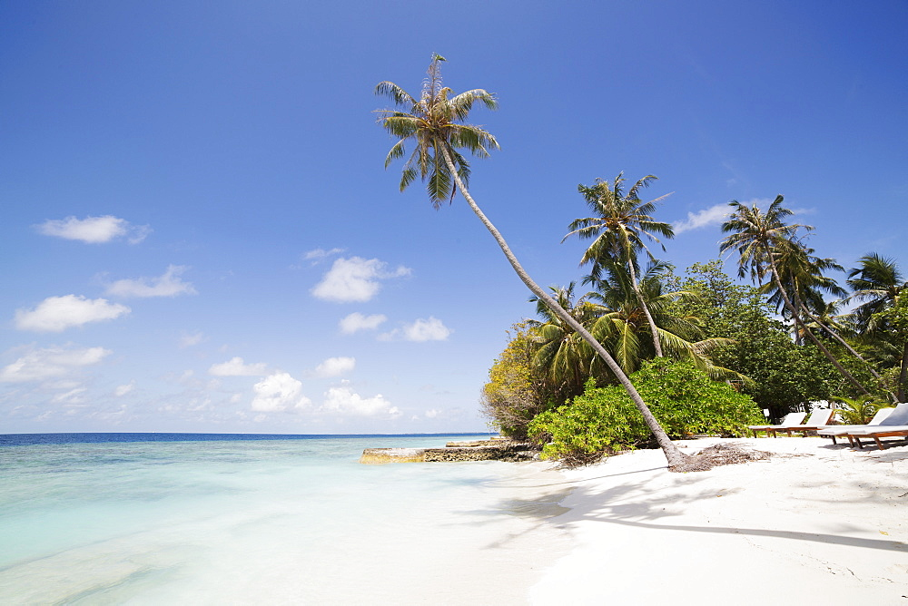 Palm trees lean over white sand, under a blue sky, on Bandos Island in The Maldives, Indian Ocean, Asia - 826-692