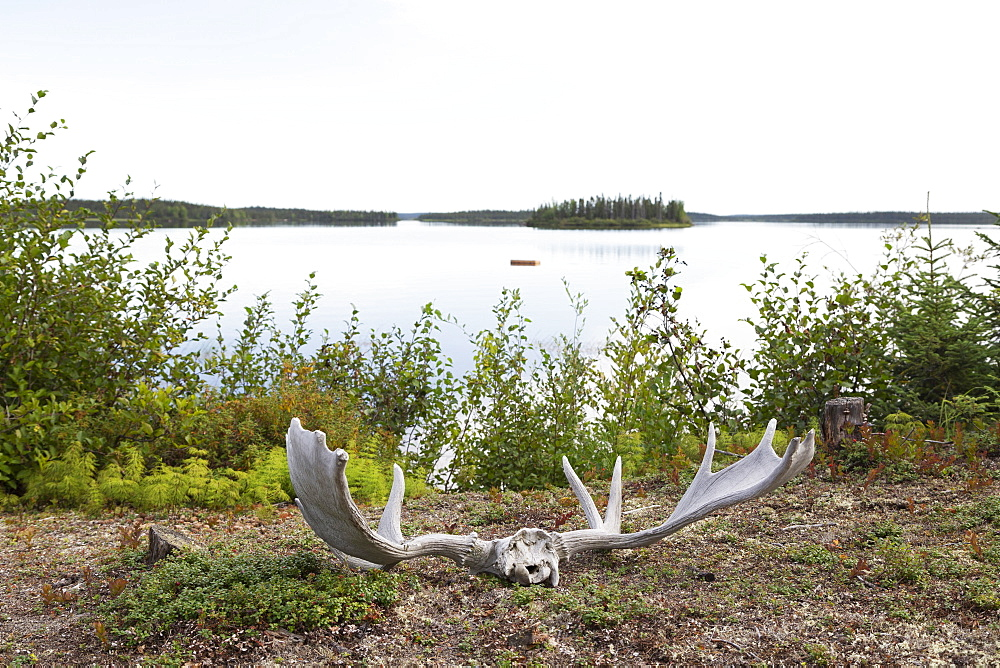 Moose antlers, shed after the rutting season, by the shore of Egenolf Lake in Manitoba, Canada, North America