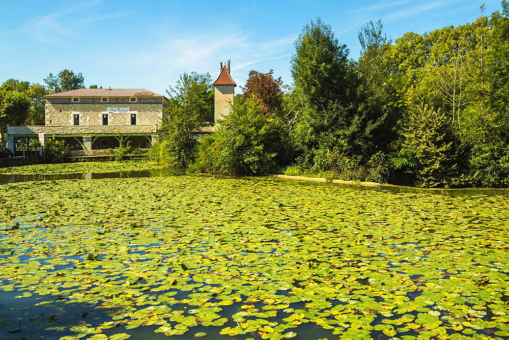 Lily pads on Le Dropt River at this popular south western historic bastide town, Eymet, Bergerac, Dordogne, France, Europe