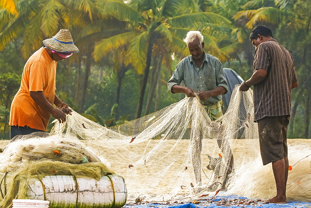 Fishermen collecting small-sized catch from gill net at popular Marari Beach; Mararikulam, Alappuzha (Alleppey), Kerala, India
