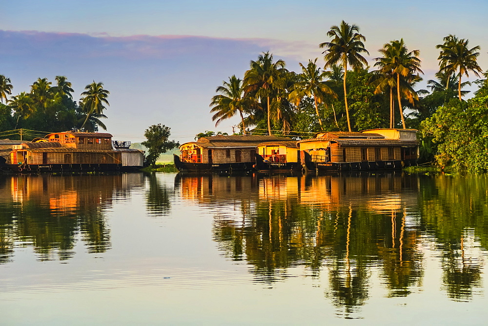Houseboats moored at dawn after the overnight stay on the popular backwater cruises here; Alappuzha (Alleppey), Kerala, India