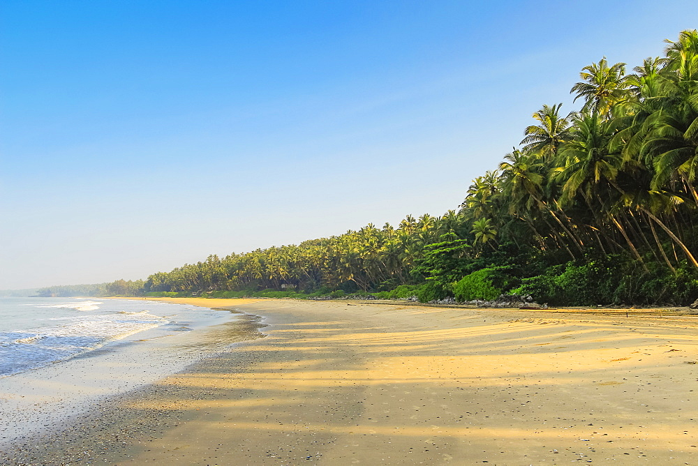 Leaning palm trees at lovely unspoilt deserted Kizhunna Beach, south of Kannur on the state's North coast, Kannur, Kerala, India, Asia