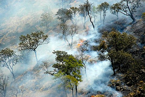 Forest fire trees smoke Jagat Annapurna Region Nepal