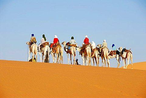 Camel trekking on sanddune in the desert Mandara Libya