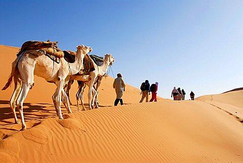 Camel trekking through the desert Mandara Libya