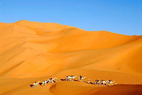 Tuareg walk with camels through big sanddunes in the desert Mandara Libya