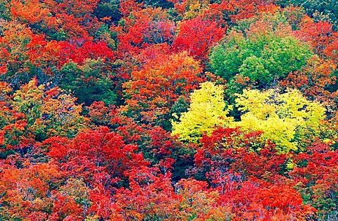 Autumn Forest, New Hampshire, USA