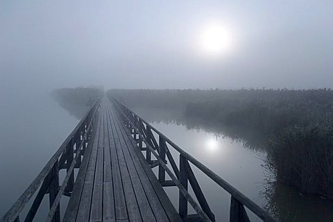 Sunrays fighting through the foggy atmosphere at Federsee lake, Nature reserve, Upper Swabia, Baden-Wuerttemberg, Germany, Europe