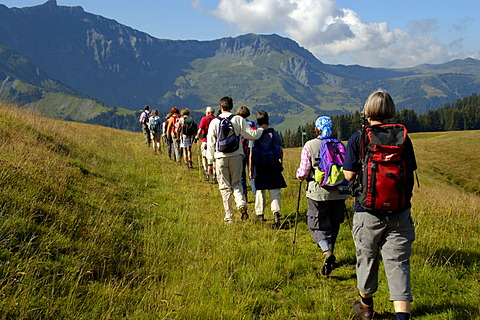 Group is hiking one after another on grass covered mountains Mont Joux Haute-Savoie France