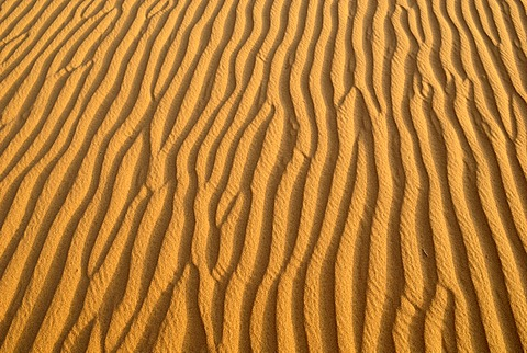 Sand ripples, surface of a dune, Tassili du Hoggar, Wilaya Tamanrasset, Algeria, Sahara, North Africa