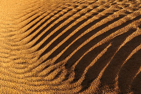 Rippled surface of a sand dune of Erg Admer, Wilaya Illizi, Algeria, Sahara, North Africa, Africa