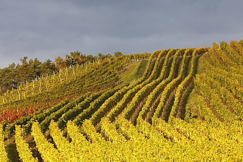 Vineyards near Altmannsdorf, Steigerwald, Lower Franconia, Franconia, Bavaria, Germany, Europe