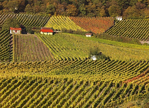 Vineyards at Falkenberg near Falkenstein, Donnersdorf district, Steigerwald, Lower Franconia, Franconia, Bavaria, Germany, Europe