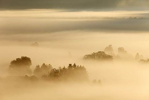 Morning fog over Loisach Moor or Loisach-Kochelsee-Moor, Blaues Land region, Upper Bavaria, Bavaria, Germany, Europe