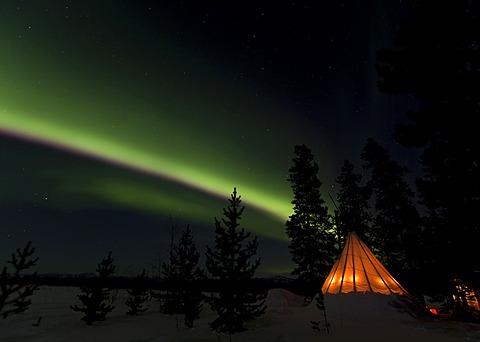 Illuminated teepee, tipi, tepee, northern polar lights, Aurora borealis, green, near Whitehorse, Yukon Territory, Canada, America