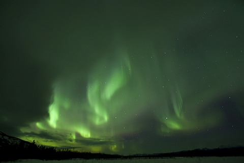 Swirling Northern lights, Polar aurora or Aurora Borealis, green, near Whitehorse, Yukon Territory, Canada