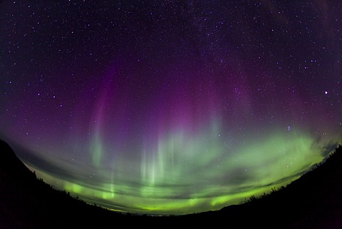 Curtains of Northern lights, Polar Aurorae, Aurora Borealis, green, pink, purple, near Whitehorse, Yukon Territory, Canada
