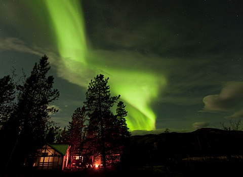 Illuminated, lit wall tent, cabin with swirling northern polar lights, Aurora Borealis, green, near Whitehorse, Yukon Territory, Canada