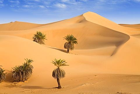 Um el Ma Oasis, date palms and sand dunes, Libyan Desert, Libya, Sahara, North Africa, Africa