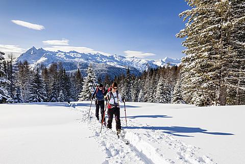 Ski tourers ascending the Cima Bocche at Passo Valles, behind the Colbricon, Parco Naturale Paneveggio, Pale di San Marino, Dolomites, Trentino, Italy, Europe