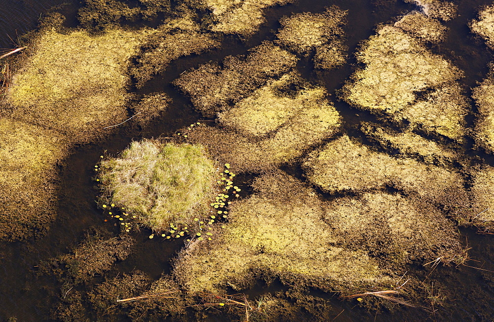 Marshland with aquatic plants, aerial view, Okavango Delta, Botswana, Africa