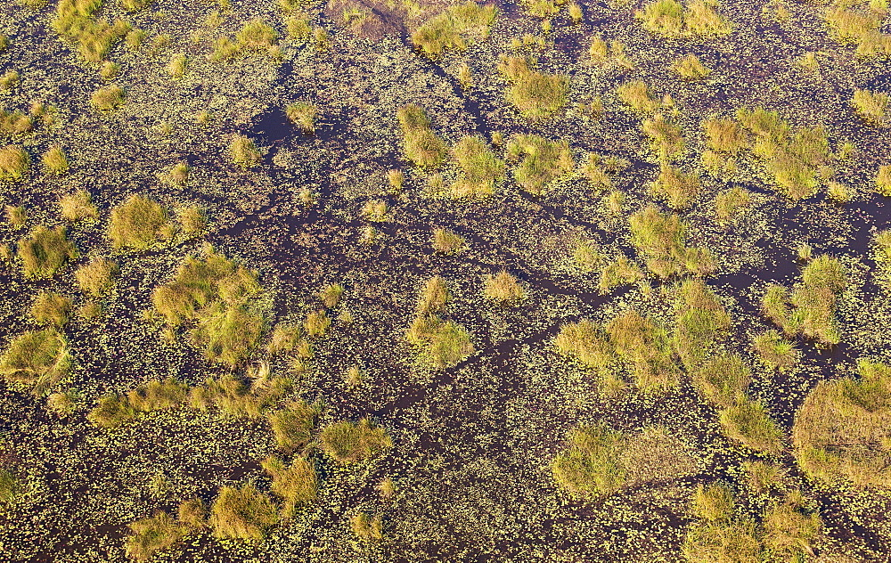 Freshwater marshes with animal trails, aerial view, Okavango Delta, Botswana, Africa