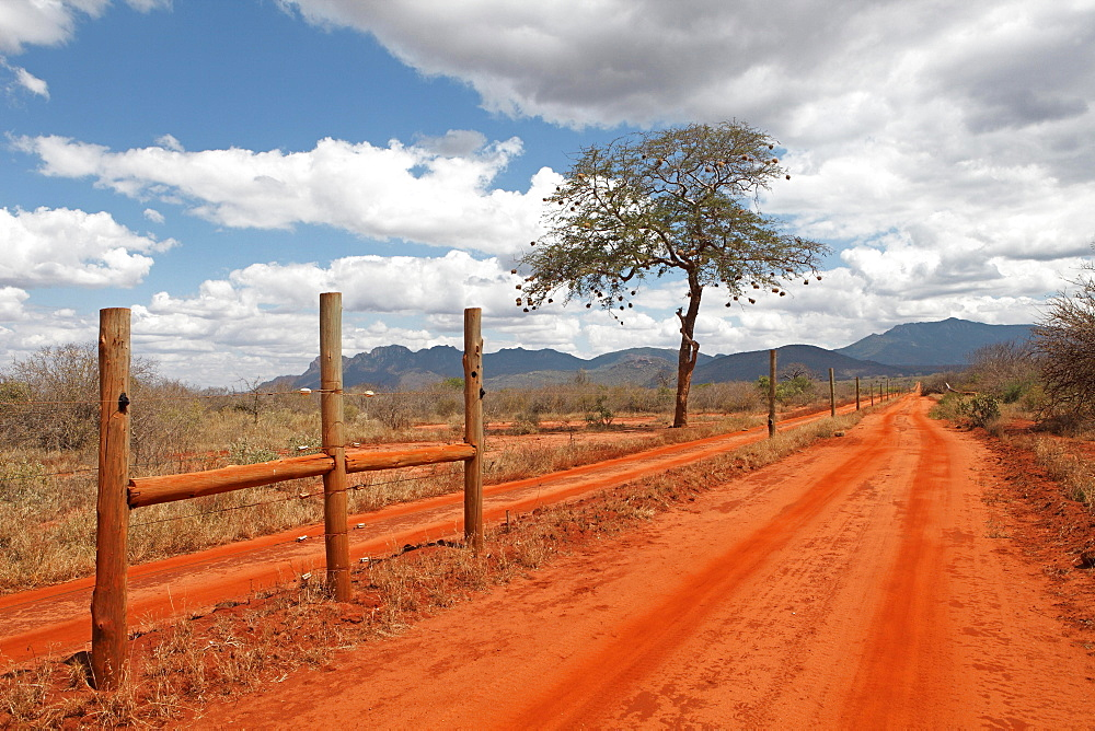Electric fence of Rhino Sanctuary on red dirt road, tamarind (Tamarindus indica) with weaver birds (Ploceidae) nests in back, Tsavo West National Park, Taita-Taveta County, Kenya, Africa