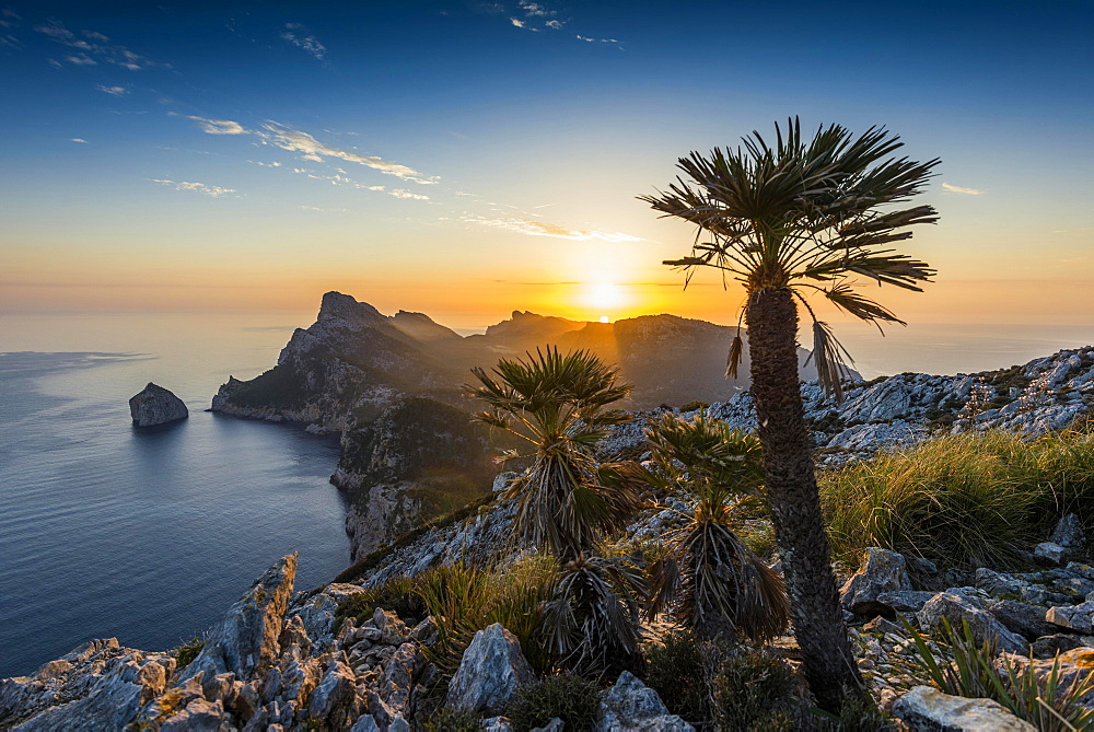 Sunrise, palm in front of Cap Formentor, Port de Pollença, Serra de Tramuntana, Majorca, Balearic Islands, Spain, Europe