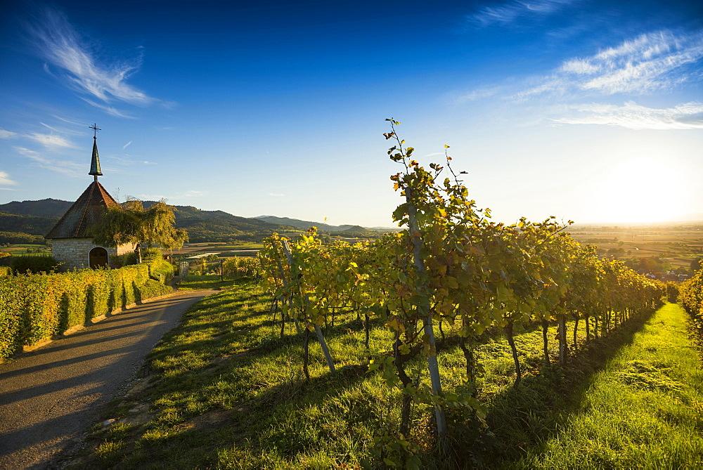 Ölbergkapelle between vineyards, Ehrenstetten, Markgräflerland, Black Forest, Baden-Württemberg, Germany, Europe
