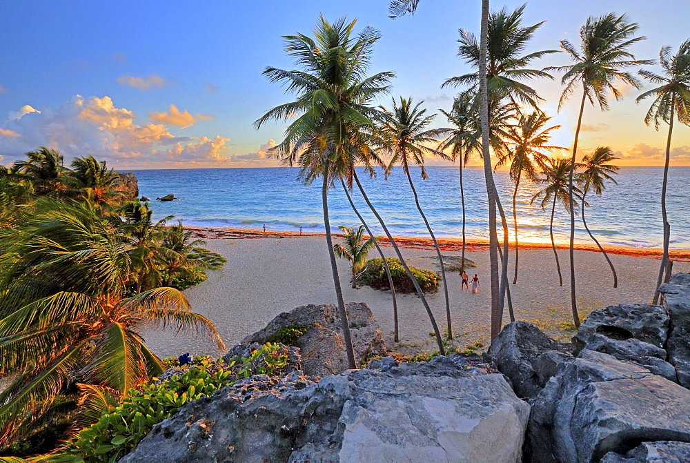 Bottom Bay, sandy beach with palm trees at sunrise, Barbados, Lesser Antilles, Caribbean Sea, West Indies, Central America