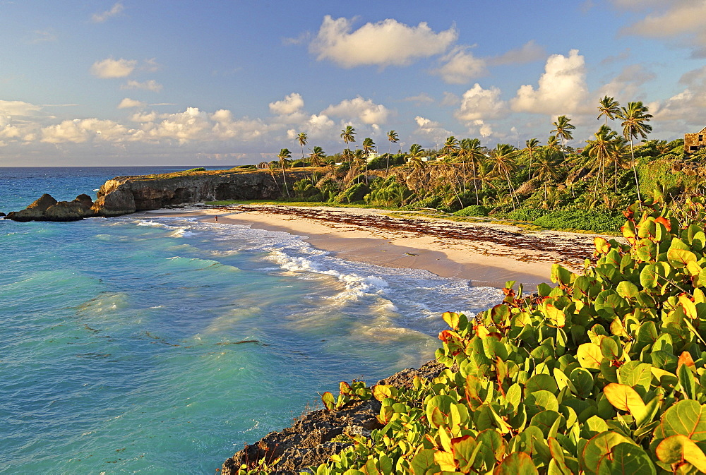 Cave Bay, beach at the Atlantic Ocean, Barbados, Lesser Antilles, Caribbean, West Indies, Central America