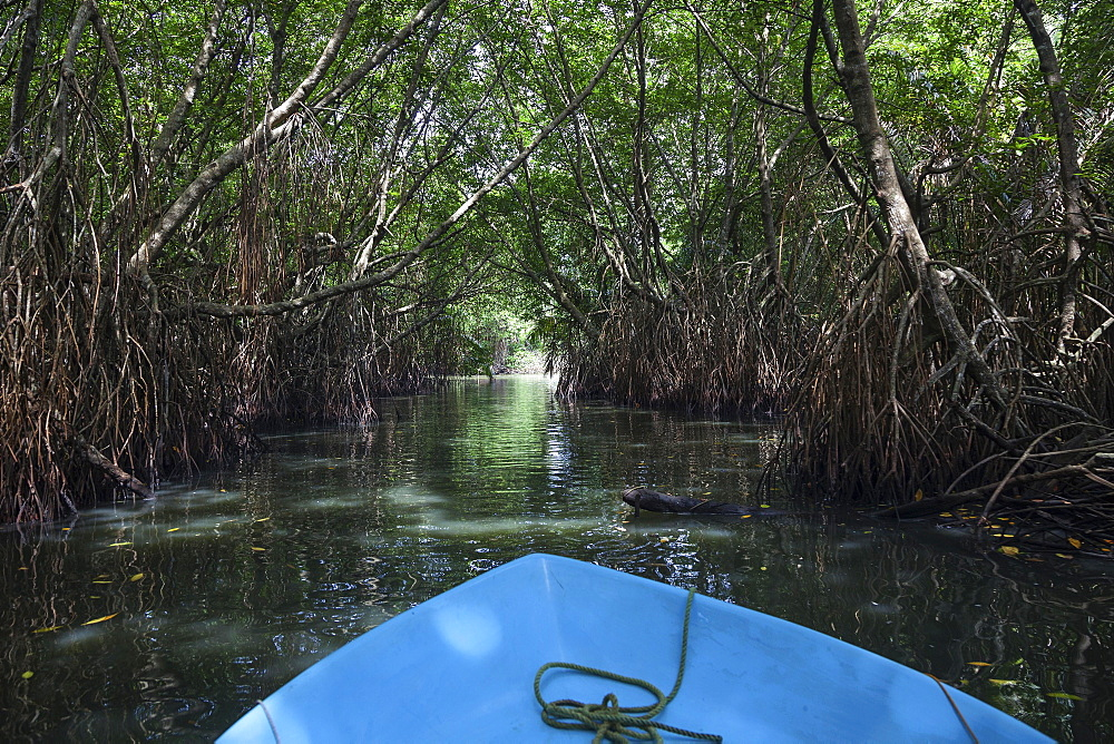 Boat ride through mangrove forest, branch of Bentota Ganga River, Bentota, Western Province, Sri Lanka, Asia