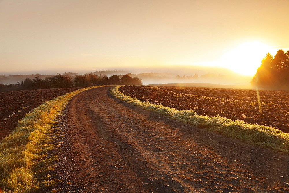 Way between farmland with morning mist at sunrise, Hunsrück, Rhineland-Palatinate, Germany, Europe