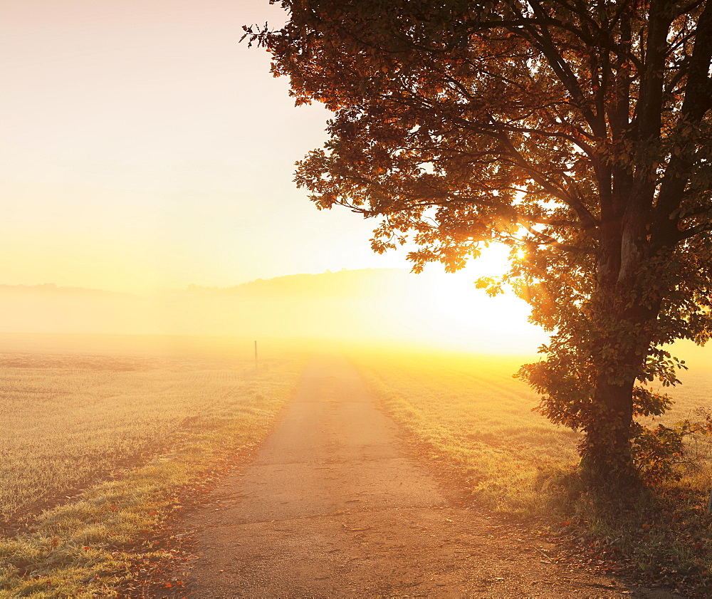 Way between farmland with morning mist at sunrise, Hunsrück, Rhineland-Palatinate, Germany, Europe