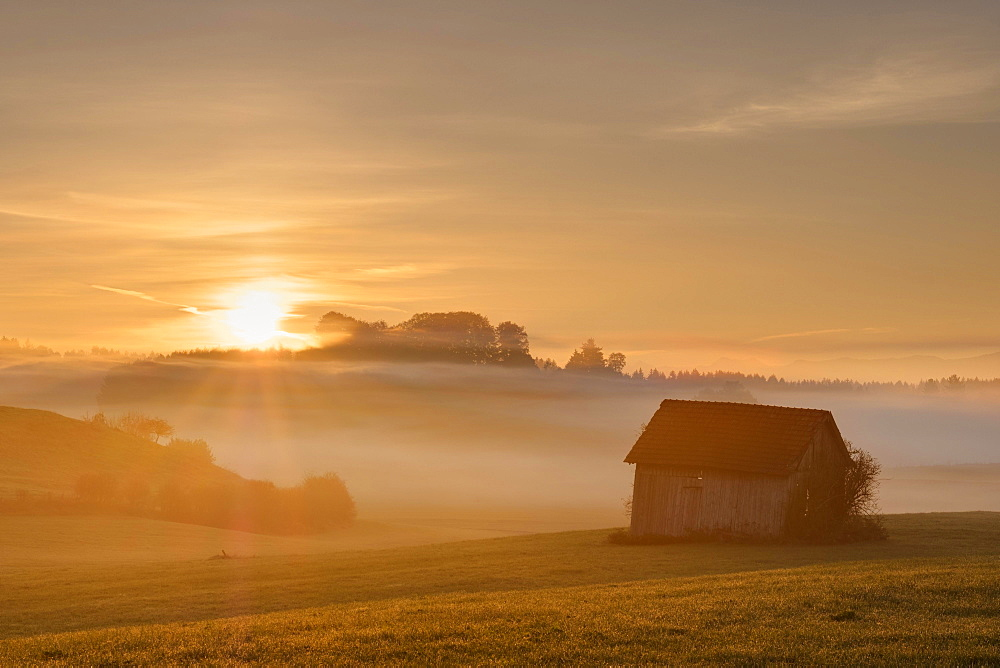 Sunrise, Heustadl on a meadow, foggy atmosphere, Bauersbach near Wielenbach, Fünfseenland, Upper Bavaria, Bavaria, Germany, Europe