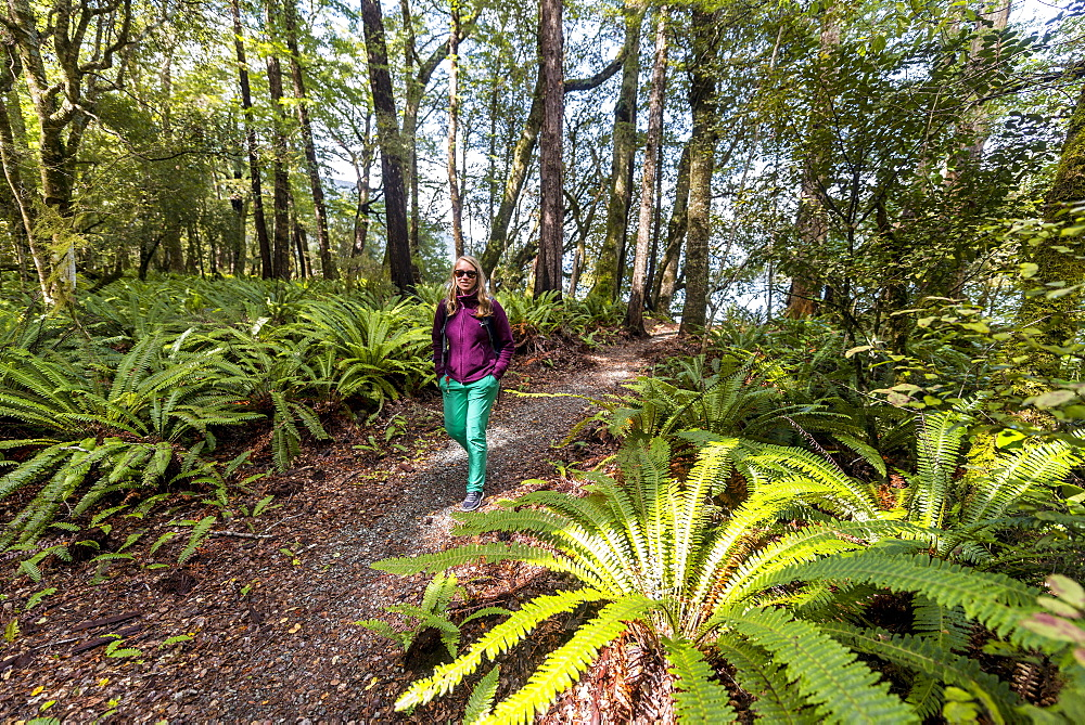 Hiker walking through forest with tree ferns, Abel Tasman National Park, Southland, New Zealand, Oceania