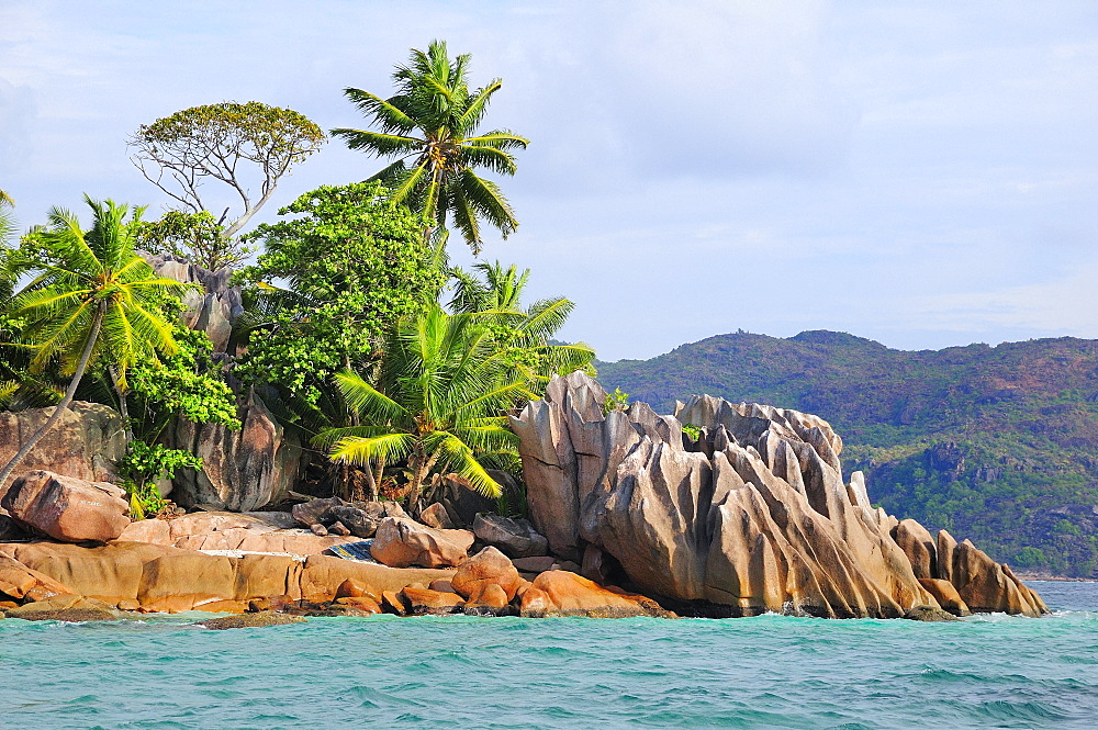 Coast with palm trees on eroded rocks, Curieuse Island, near Praslin Island, Seychelles, Africa