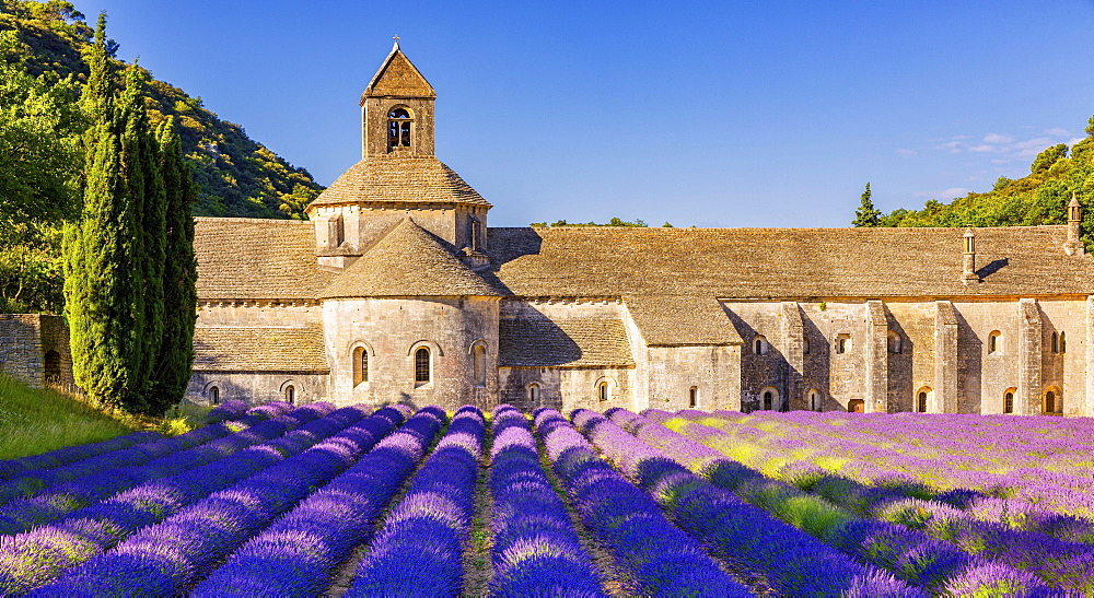 The Romanesque Cistercian Abbey of Notre Dame of Senanque set amongst flowering lavender fields, near Gordes, Provence, France, Europe