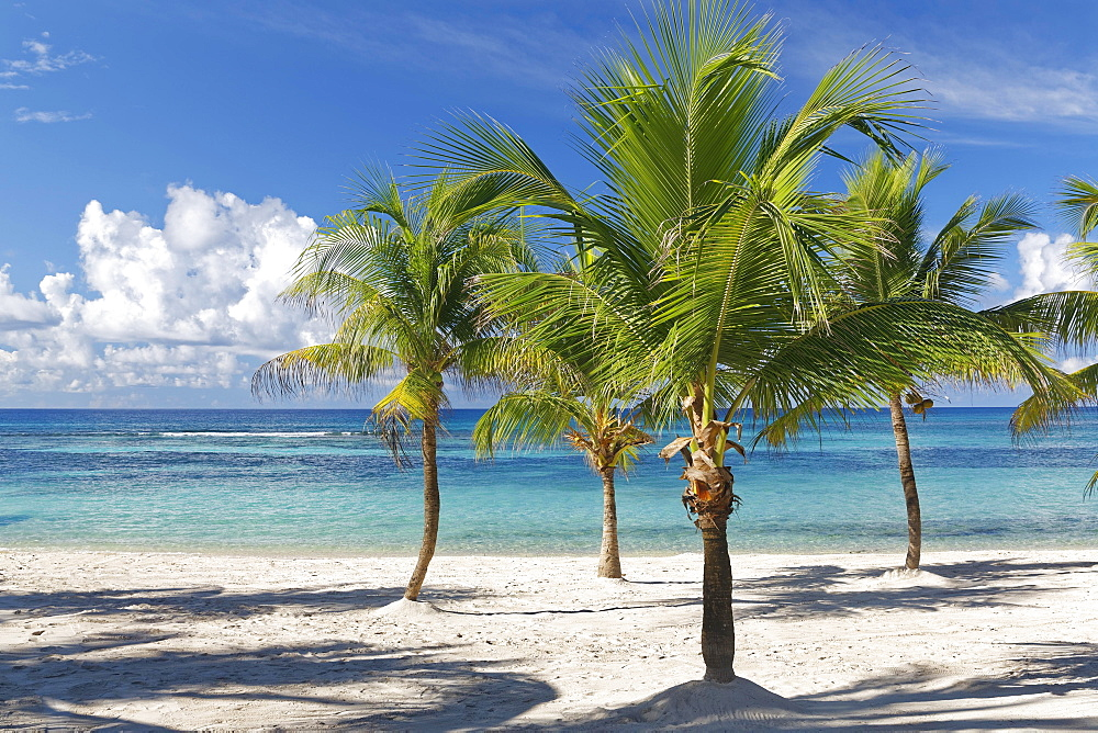 Dream beach, sandy beach with palm trees and turquoise sea, Parque Nacional del Este, Isle Saona, Caribbean, Dominican Republic, Central America