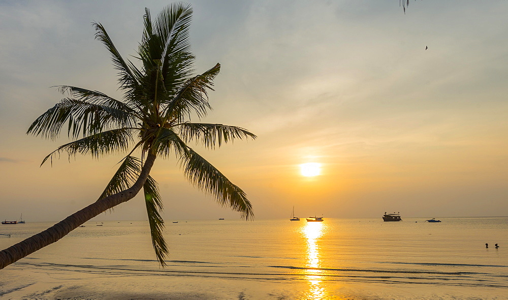 Palm tree at sunset on the beach of Koh Tao, Gulf of Thailand, Thailand, Asia