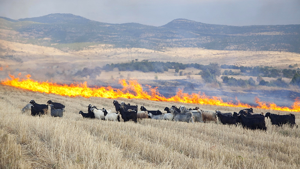 Field fire in eastern Anatolia, Turkey, Asia