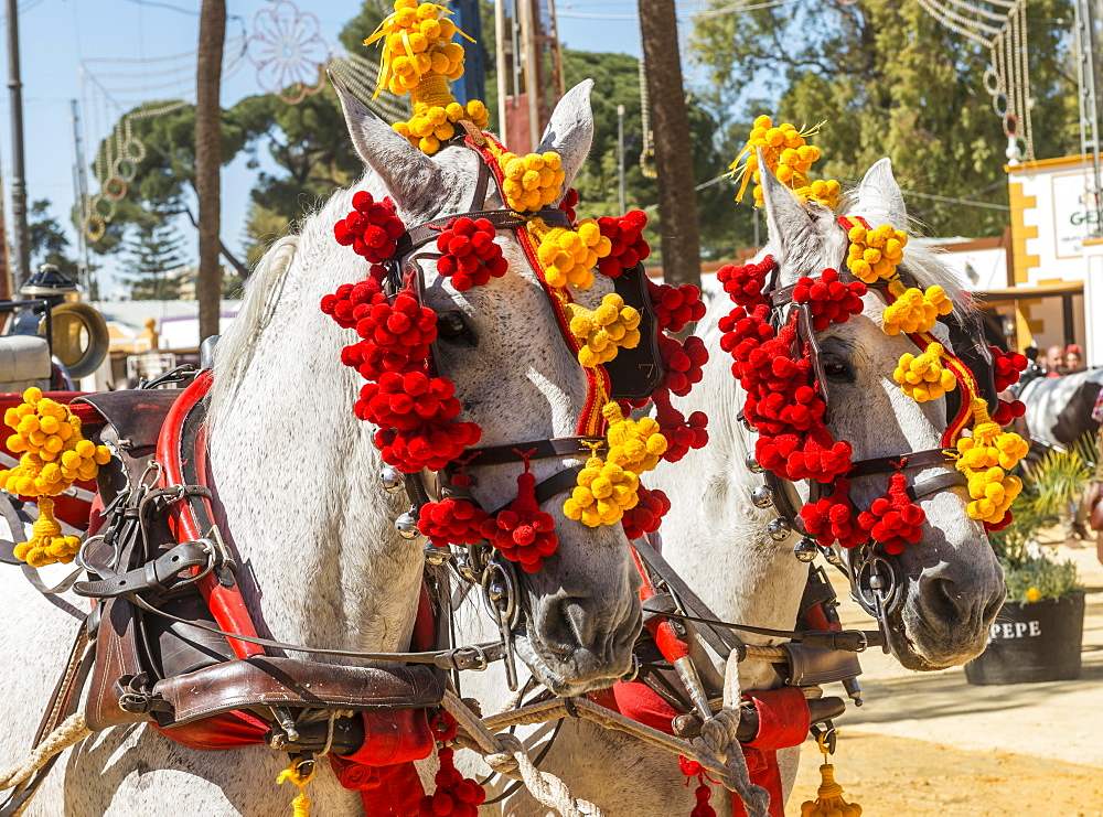Decorated horses, Feria de Caballo, Jerez de la Frontera, Cadiz province, Andalusia, Spain, Europe