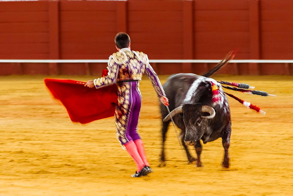 Racing bull with Matador, Torero or Toureiro in traditional dress, third part, so-called Faena, bullfighting, bullring Plaza de Toros de la Real Maestranza de Caballeria de Sevilla, Sevilla, Andalusia, Spain, Europe