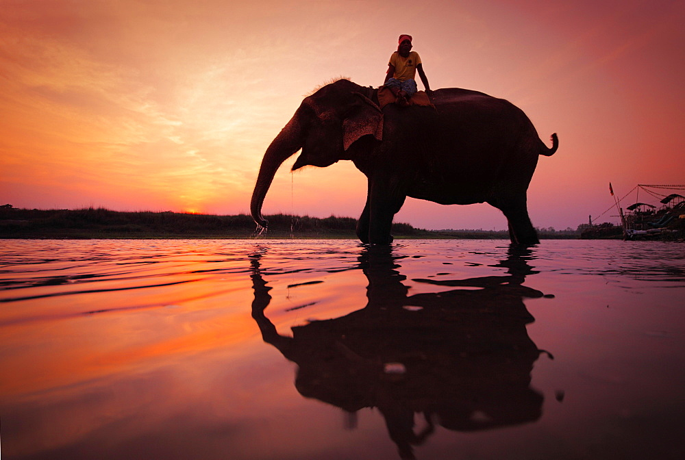 Elephant (Elephas maximus indicus) with rider, drinking, in water at sunset, silhouette, Chitwan National Park, Nepal, Asia - 832-383847