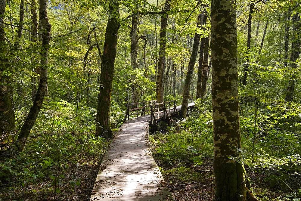 Wooden walkway through jungle, national park Biogradska Gora, province Kolasin, Montenegro, Europe
