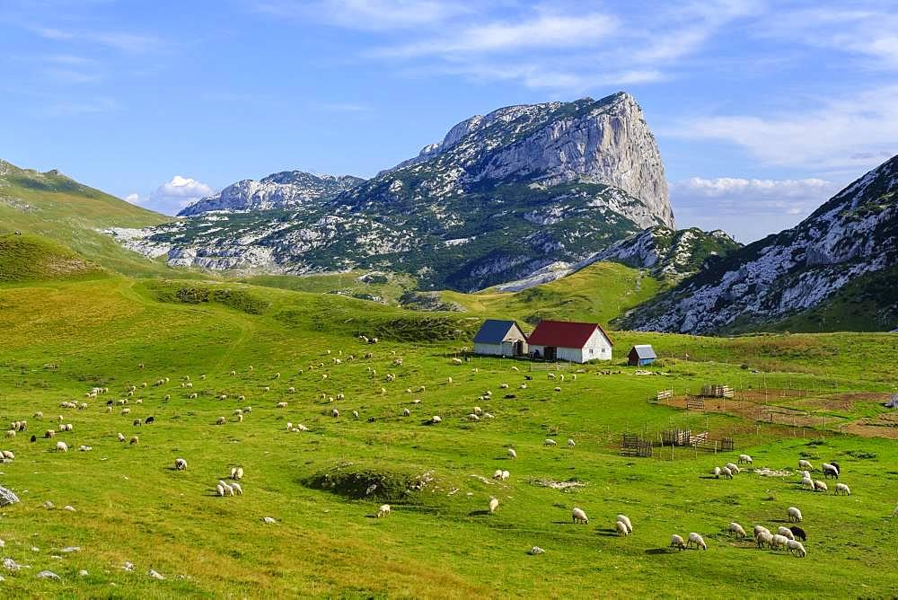 Alm Sarban and mountain Boljska Greda, Durmitor Massif, Durmitor National Park, Savnik Province, Montenegro, Europe
