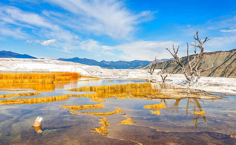 Dead trees on sinter terraces, hot springs, orange mineral deposits, Palette Springs, Upper Terraces, Mammoth Hot Springs, Yellowstone National Park, Wyoming, USA, North America