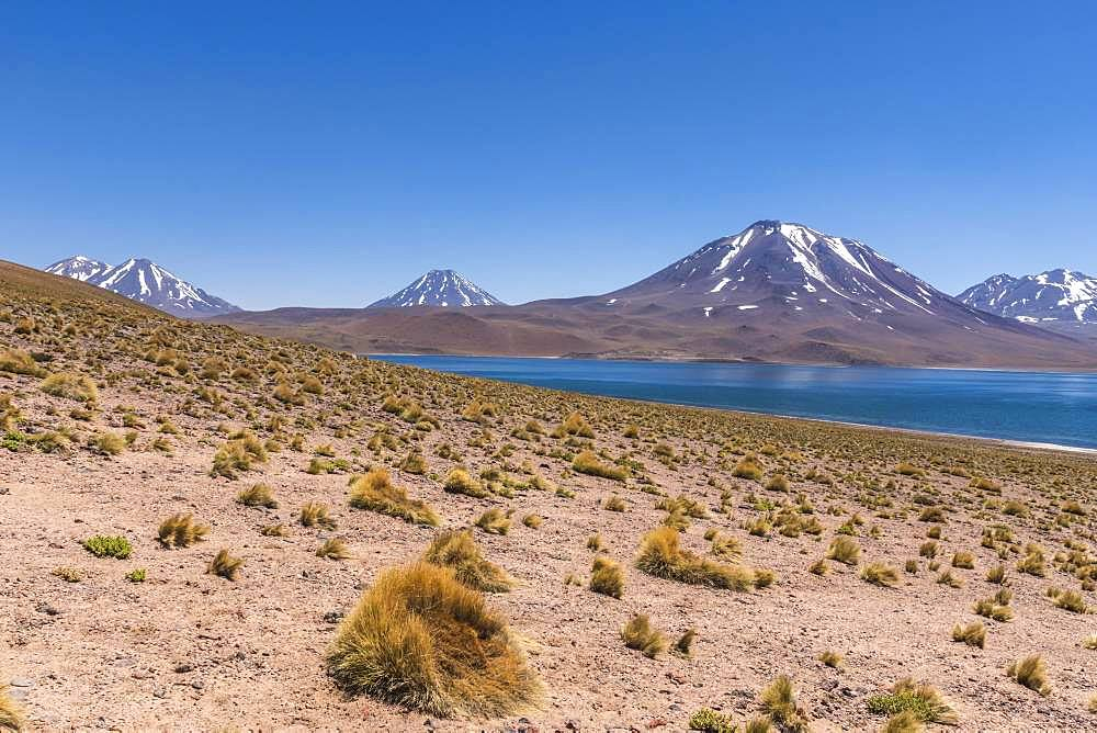 Lagoon, Laguna Miscanti with volcano Chiliques and Cerro Miscanti, Altiplano, Region de Antofagasta, Chile, South America