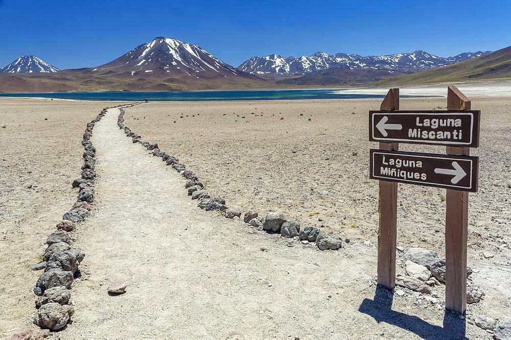 Guide to the lagoon, Laguna Miscanti with Volcano Chiliques and Cerro Miscanti, Altiplano, Region de Antofagasta, Chile, South America