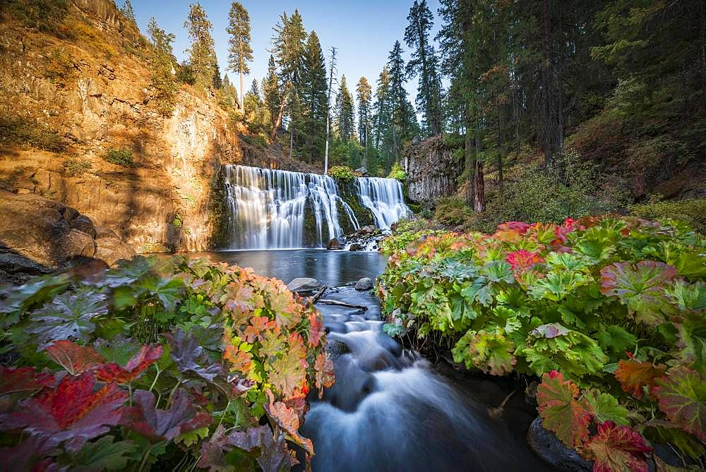 Middle Falls, Fall Waterfall, McCloud River, Siskiyou County, California, USA, North America